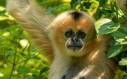 Zoo des Sables - zoo-Panthere-de-l-Amour©S-Silhol